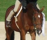 2012 USEF Pony Finals Under Saddle 4th Place