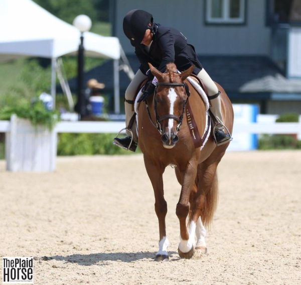 Eddie Bauer and Jessie 8th in the Under Saddle USEF Pony Finals 2018
